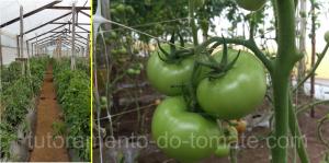 HORTOMALLAS, tutoramento do tomate, rede de tutoramento, , malha  tutoramento, malha apoio, malha treliça, hortaliças, ráfia, rede apoio, malha dupla, tomate, túnel de tomate